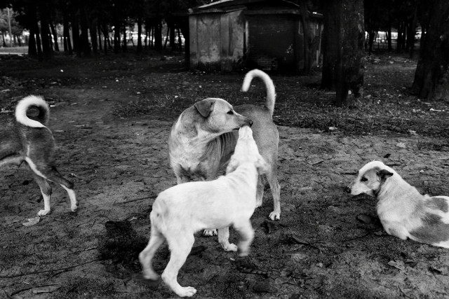 Street dogs find safe shelter and source of food in the park.
